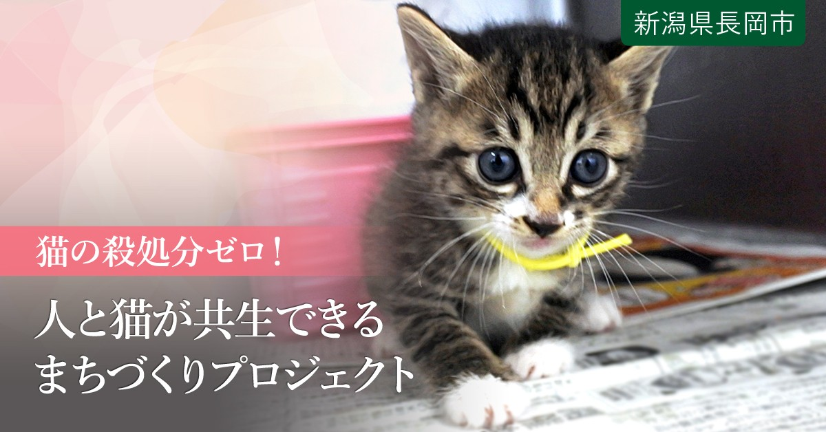 動物 センター 長岡 愛護