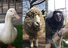 足羽山公園遊園地の動物にファミリーを増やしたい!