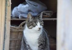 【第3弾】みんなの力で守れる猫の命がある~人と動物が共生できる社会を目指して~