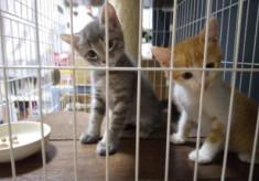 人も猫も幸せなまちづくりのために!地域猫活動推進プロジェクト