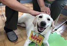 【第3弾】災害救助犬とセラピードッグを育成・派遣し、ワンコと人がいつでも寄り添い・共生する拠点をつくりたい!
