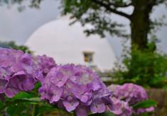 【第4弾】足羽山を市の花アジサイの名所として復活させたい!