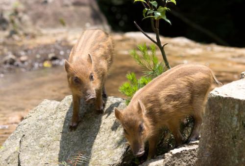 【第4弾】里山を保全し野生動物の命を守る~未来のためにいま私たちにできること~