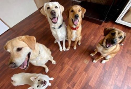 元気で長生き!!愛犬の健康寿命をのばせ!!~徳島初のペット介護施設で愛犬も飼い主も楽しく過ごそう~