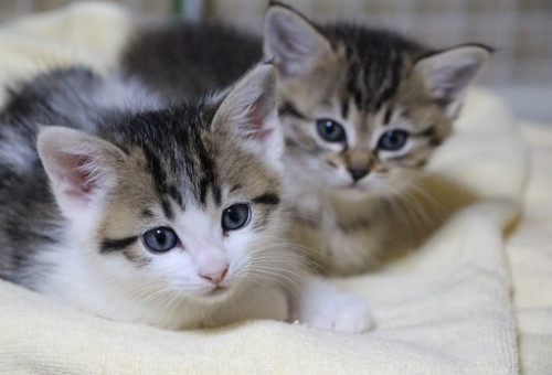 命を大切にするまちづくり!人と猫との共生を目指して…「地域猫活動」を広めたい!!