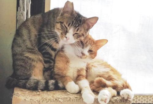 【第2弾】無秩序な猫の繁殖を防ぎ、人と猫のより良い共生を叶えたい!