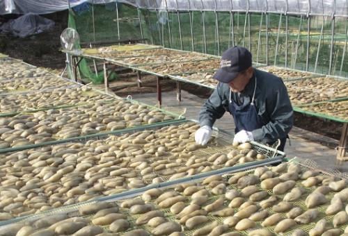 幻の丸干し芋「小倉乾燥芋」を未来に繋げたい。お客様に安定的にお届けできる仕組み作り