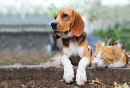 """人と犬猫が共に暮らすまちを目指して! """"犬猫の大切な「命」を守ろうプロジェクト"""""""