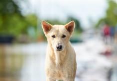 全国に動物避難所を!災害時にすべての命を守るための、動物避難所マップ作成プロジェクト
