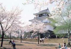 悠久山公園の千本桜を未来へ継承!!