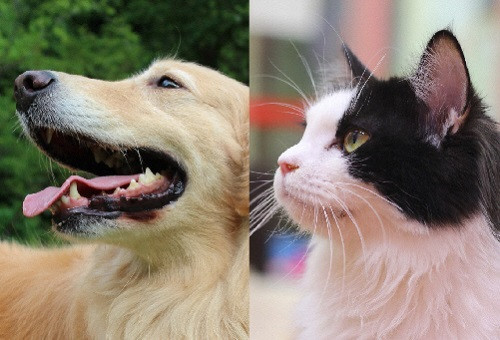 目指せ殺処分ゼロ!犬猫サポートプロジェクト~人とペットの共生するまち・なごやに向けて~