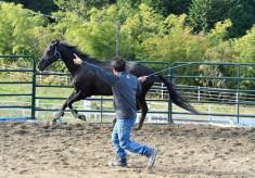 引退競走馬の活躍の場を全国へ!「リトレーニング」を今必要としています。