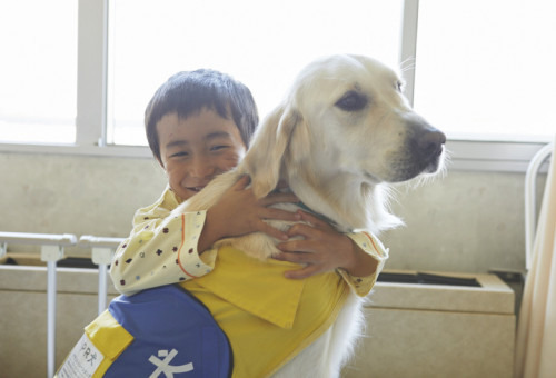 介助犬にならない犬たちの活躍育成事業