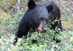 クマを森に帰そう!豊かなドングリの森づくりで、人と野生動物の共生を