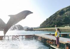イルカとヒトが会話するようにコミュニケーションできる社会を実現したい!エサでコントロールせず、信頼関係構築を重視した飼育に挑戦!
