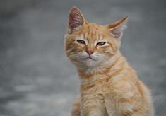人と猫が幸せに暮らせるまちづくりのために ~猫の一代限りの命を大切に守りたい~