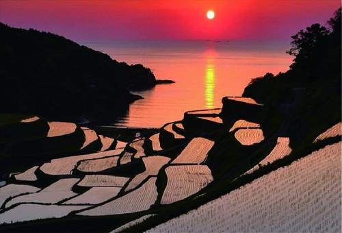 『死ぬまでに行きたい!世界の絶景』に選ばれた棚田がもう見られない!?浜野浦の棚田を守る活動をご支援ください。