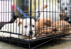 【緊急支援】コロナ危機を乗り越えて 殺処分から犬の命を守る