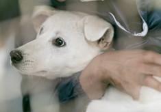 高齢でも病気でも、殺処分から救われた犬たちの命をつなぎたい