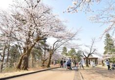悠久山公園の千本桜を未来ある子どもたちのために残したい!