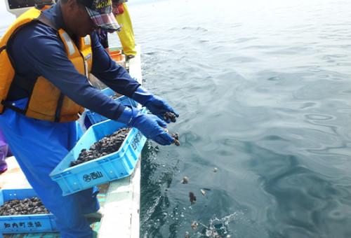 豊かな北の漁場を取り戻せ! 「水産資源増大プロジェクト」