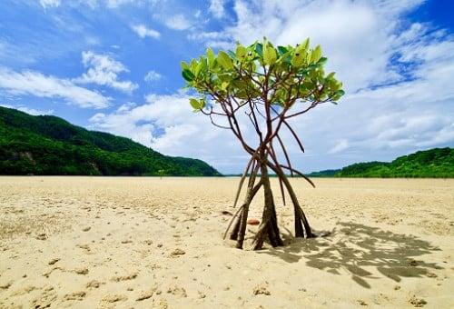 西表島の自然と文化を守る組織「西表財団」を創りたい!~島の将来を応援してください~