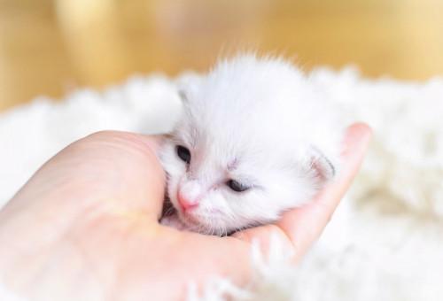 【第4弾】みんなの力で守れる猫の命がある~人と動物が共生できる社会を目指して~