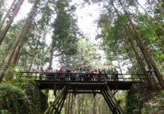 熊野古道伊勢路を歩く人に安心安全に『馬鹿曲がり橋』を渡ってもらいたい!