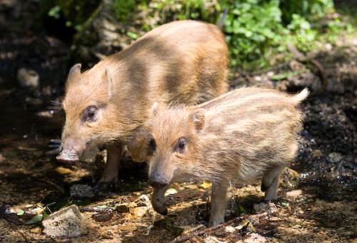 【第五弾】里山を保全し野生動物の命を守る~未来のためにいま私たちにできること~