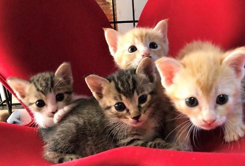 【第2弾】人と猫が共生できるまちを目指して!あまべマチ猫ネットの活動を支援したい