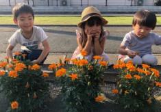 荒尾市の花風景を知ってもらいたい!花いっぱいのリーフレットを届けます