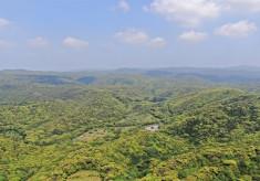 命はぐくむ水辺を守りたい!奄美フォレストポリスを人と自然が共生できる憩いの空間に。