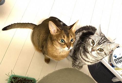 不幸な猫を減らすために ~地域猫活動へのご支援をお願いします~