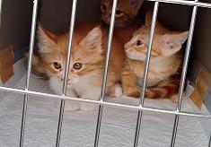 新たな「かわいそう」をなくすため、動物愛護団体を支援したい! ~動物と共生するまちづくりプロジェクト2021~