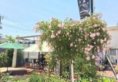 花の回廊づくりを応援してみませんか!~まちなか花回廊応援プロジェクト~