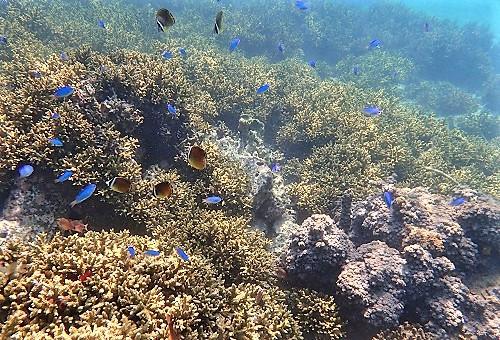 サンゴの海を未来へ残したい!竹ヶ島海域公園魅力化プロジェクト