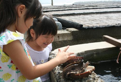アワビ漁を未来に残す!漁獲を安定させ全国の食卓に届けたい(第4弾)