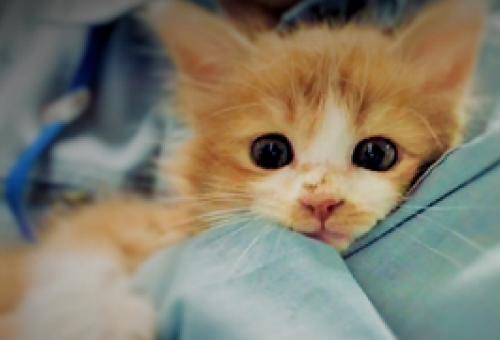 あなたの寄附で幸せになれる犬猫がいます【堺動物愛護事業】