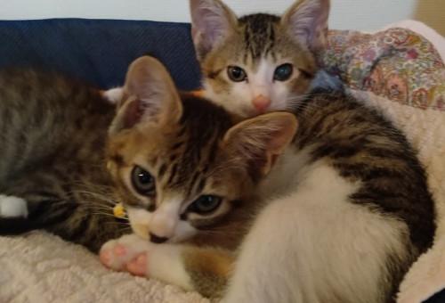 人と猫との豊かな共生へ ~野良猫の衛生対策で住みやすいまちづくりを~