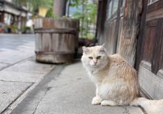 人と猫の共生を目指して!野良猫を適切に管理し、不幸な命をなくしたい!