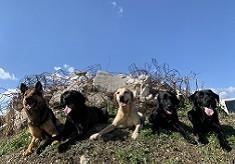 【第5弾】災害救助犬とセラピードッグを育成・派遣する体制を構築したい! 人と犬が共生する拠点「 Wan for all. All for Wan.」を作ります