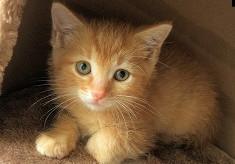 命を大切にするまちづくり!人と猫との共生を目指して…「地域猫活動」を広めたい!! 【第2弾】