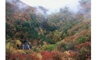 蓼科高原へ紅葉を見に訪れてみませんか。