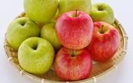 りんごの受付、始めました。。