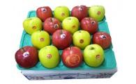 【つがる】りんごの収穫時期を迎えます【青森】