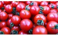 【新着商品】農家さんから直送の高原トマト