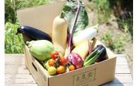 【野菜の定期便】残りわずか!迷ったら野菜が一番★