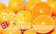 柑橘の大トロ!『せとか5㎏』が1万円でお買い得!