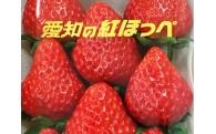 今が旬!岡崎市人気NO.1の極甘いちご