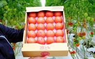 毎日食べたい飽きないトマト! 4㎏ × 2箱